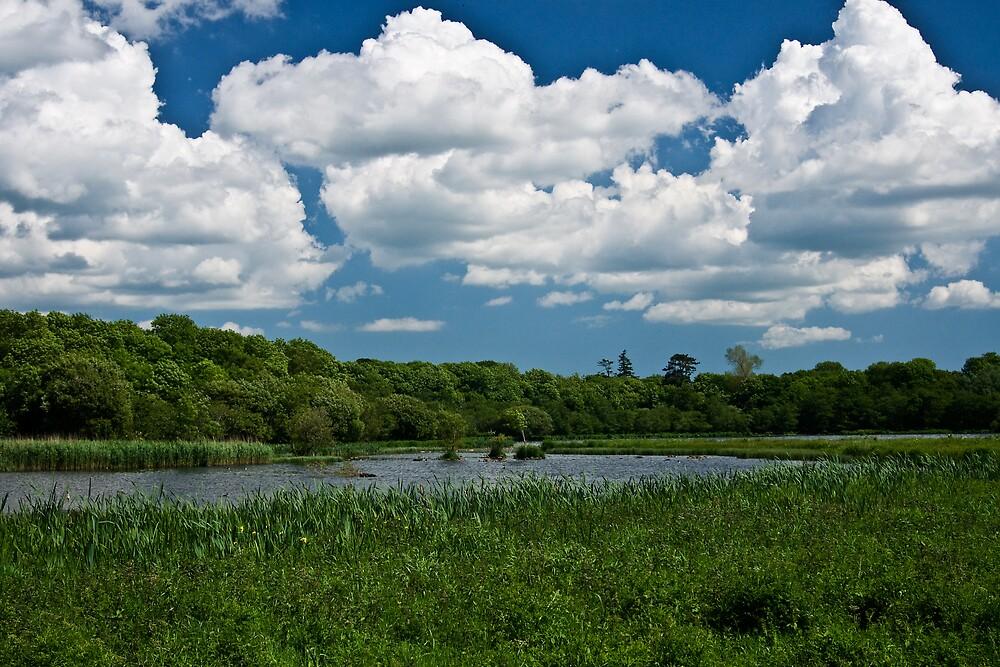 Nature Reserve by Michael Jordan