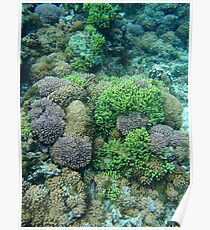 Lord Howe Island Coral Poster