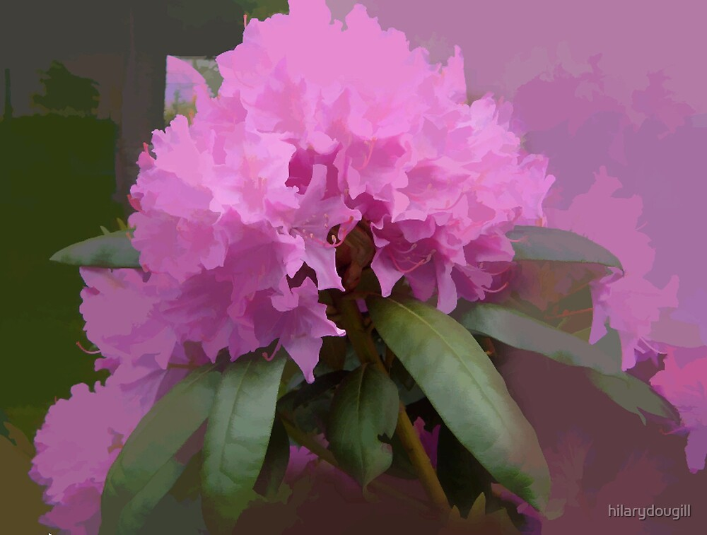 abstract of Pink Rhodedendrun for all RBers by hilarydougill