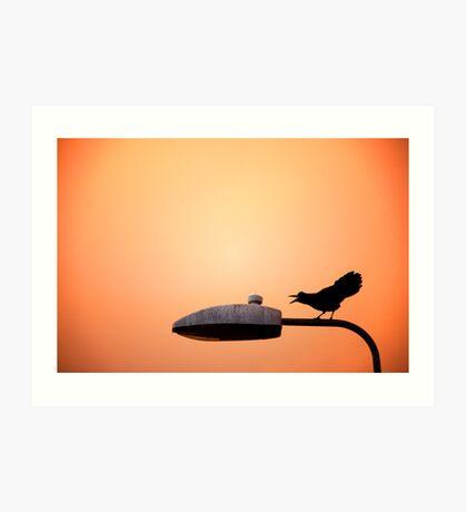 Sunset Bird Art Print