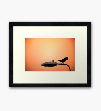 Sunset Bird Framed Print