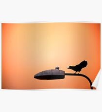 Sunset Bird Poster