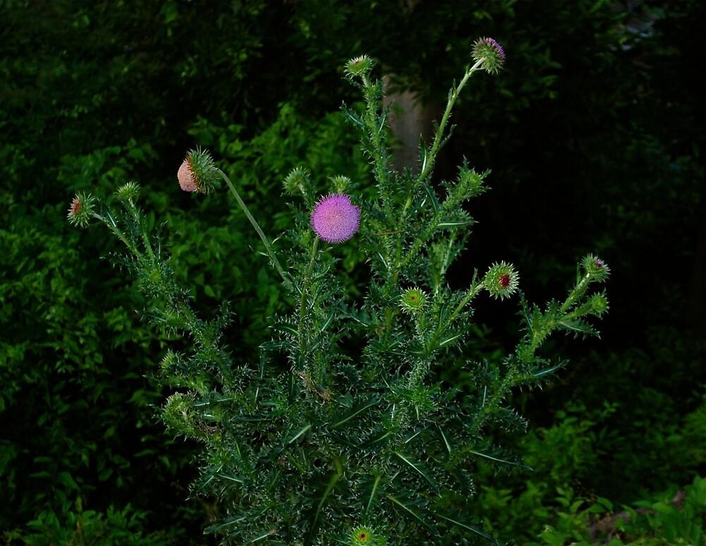 Lone Flower by Jim Caldwell