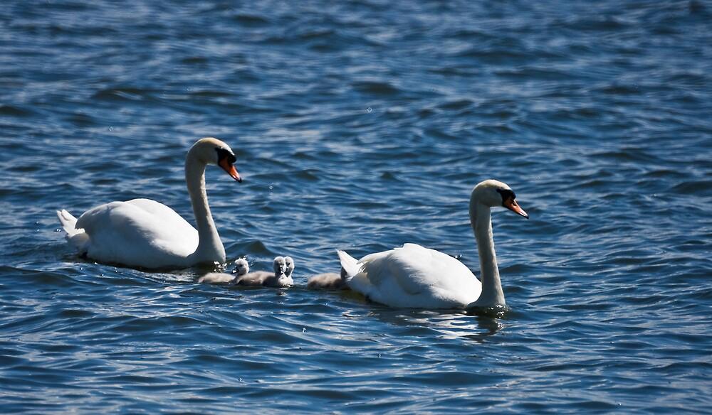 Swan Lake by Michael Jordan