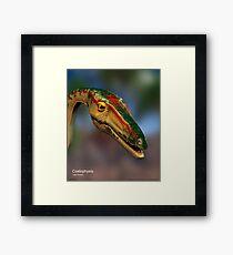 Coelophysis Framed Print