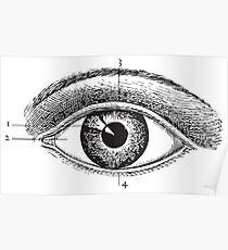 Human Anatomy Drawing: Eye Closeup Poster