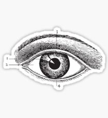Human Anatomy Drawing: Eye Closeup Sticker