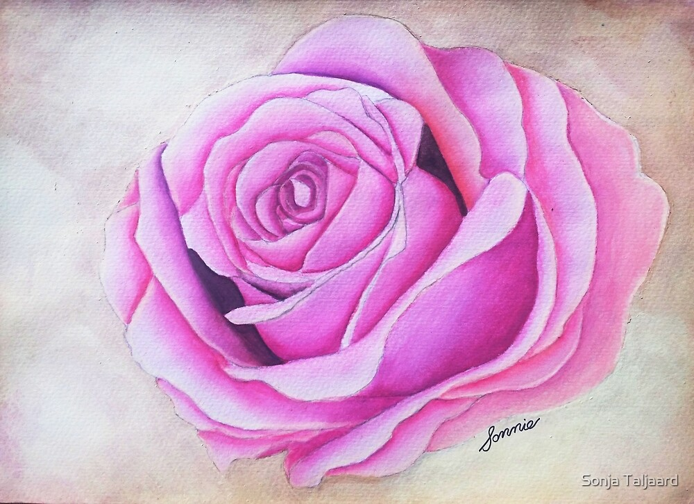 Pink rose by SonjaT