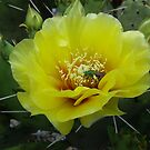 Cactus flower with a bee by 1FANCY1