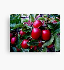 Crabapples Canvas Print