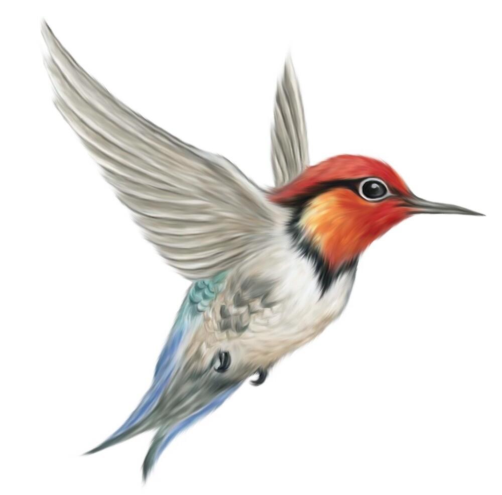 bird by kapor244