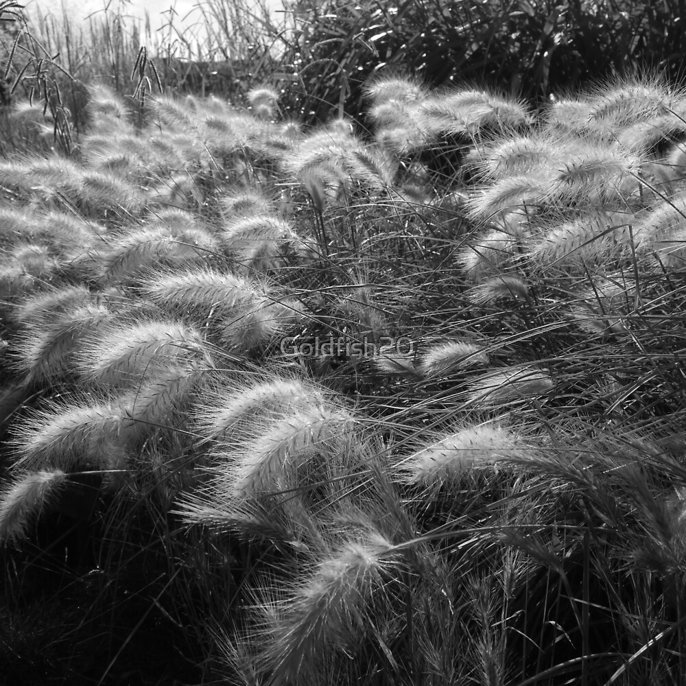 Sea of Grass by Goldfish20