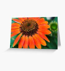 Burst of orange Greeting Card