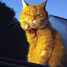Ginger cat with toothache by turniptowers