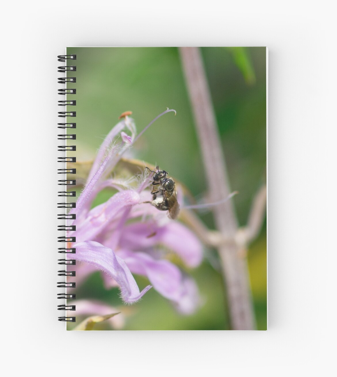 Teeny Bee on Beebalm by Asia Murphy