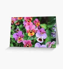 Vibrant Pansies  Greeting Card