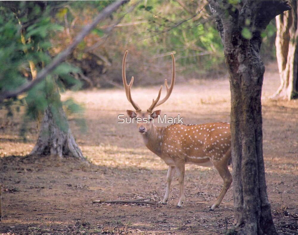 Nature - Deer by Suresh Mark