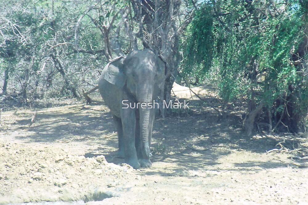 Nature - Elephant by Suresh Mark