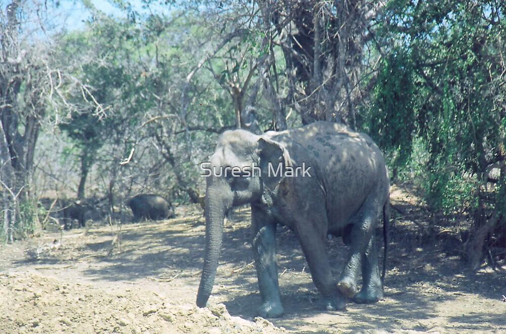 Nature - Wild Elephant (one angle) by Suresh Mark