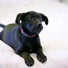 dog by Billy Lucero