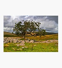 Branch Line Photographic Print