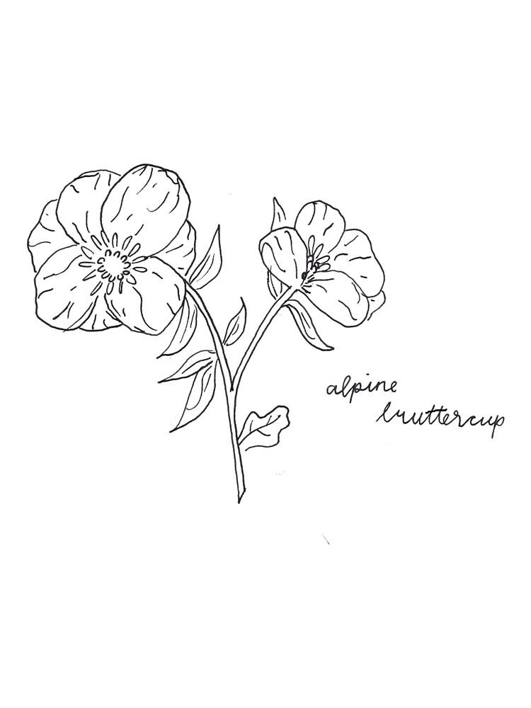 Flower fam 1 - Alpine Buttercup by MCKayWorks
