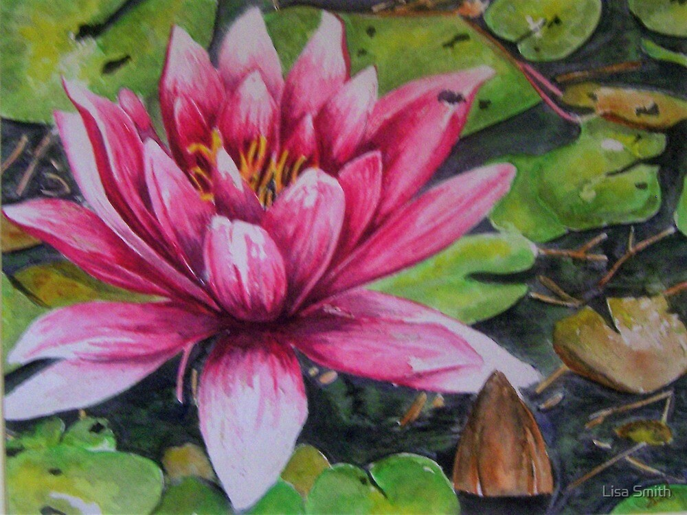 water lily by Lisa Smith