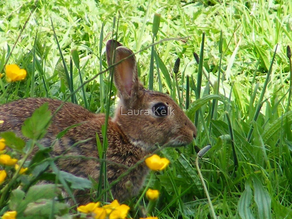 Buttercup Bunny by Laura Kelk