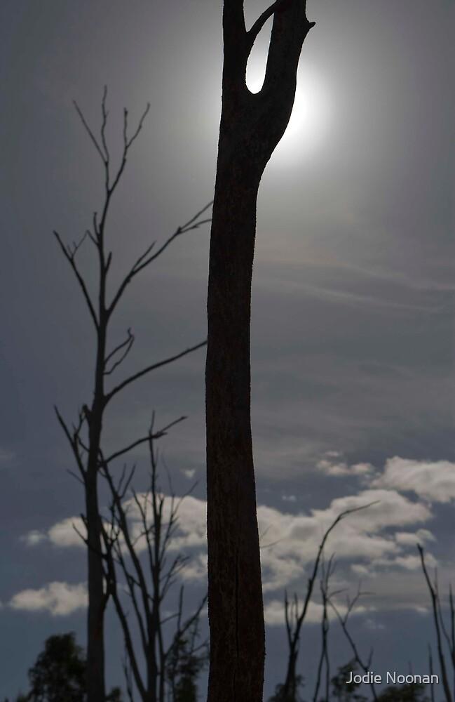 Dead Wood by Jodie Noonan