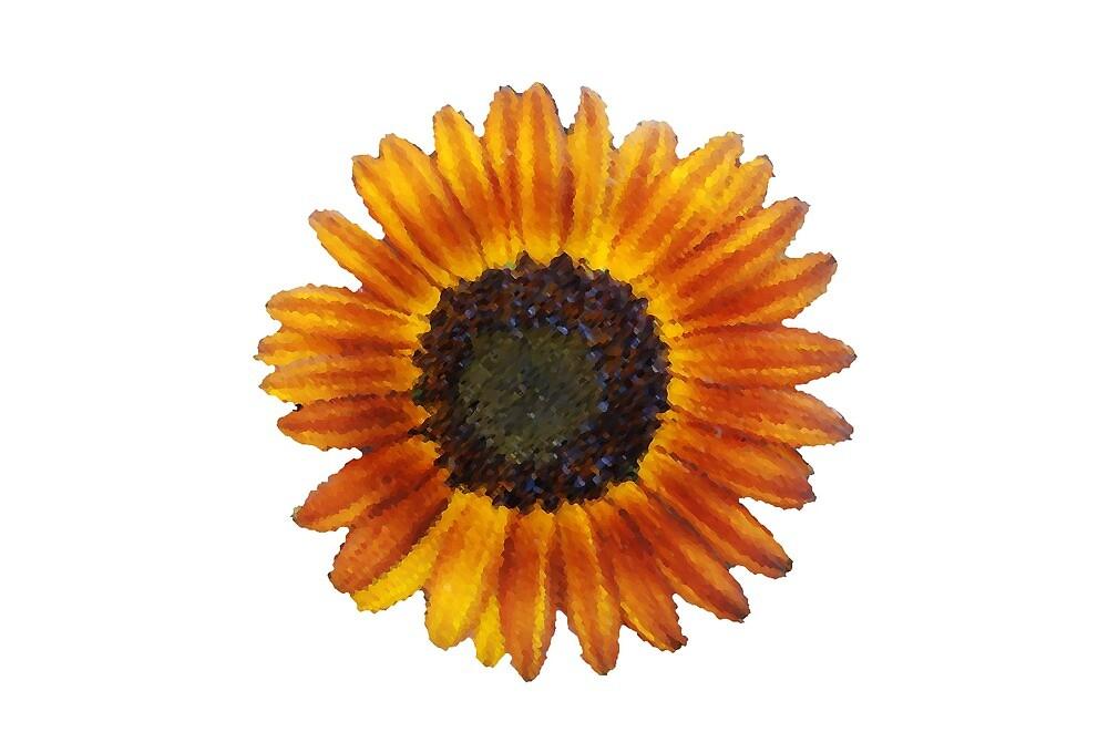 Sunflower by hannahgage17
