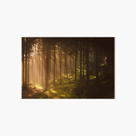 Morning forest Art Board Print