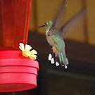Hummingbird, Osier, Colorado by lenspiro