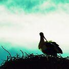 Nesting by Rebecca Wachtel
