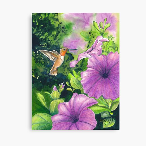 Hummingbird and Purple Petunias Canvas Print