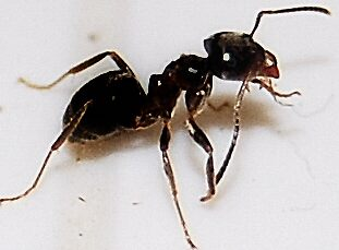 ant , by cool3water