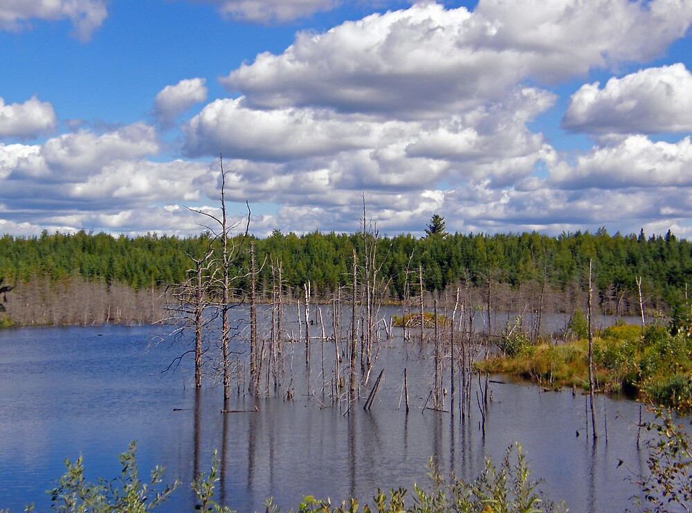 Swampscape View by marchello