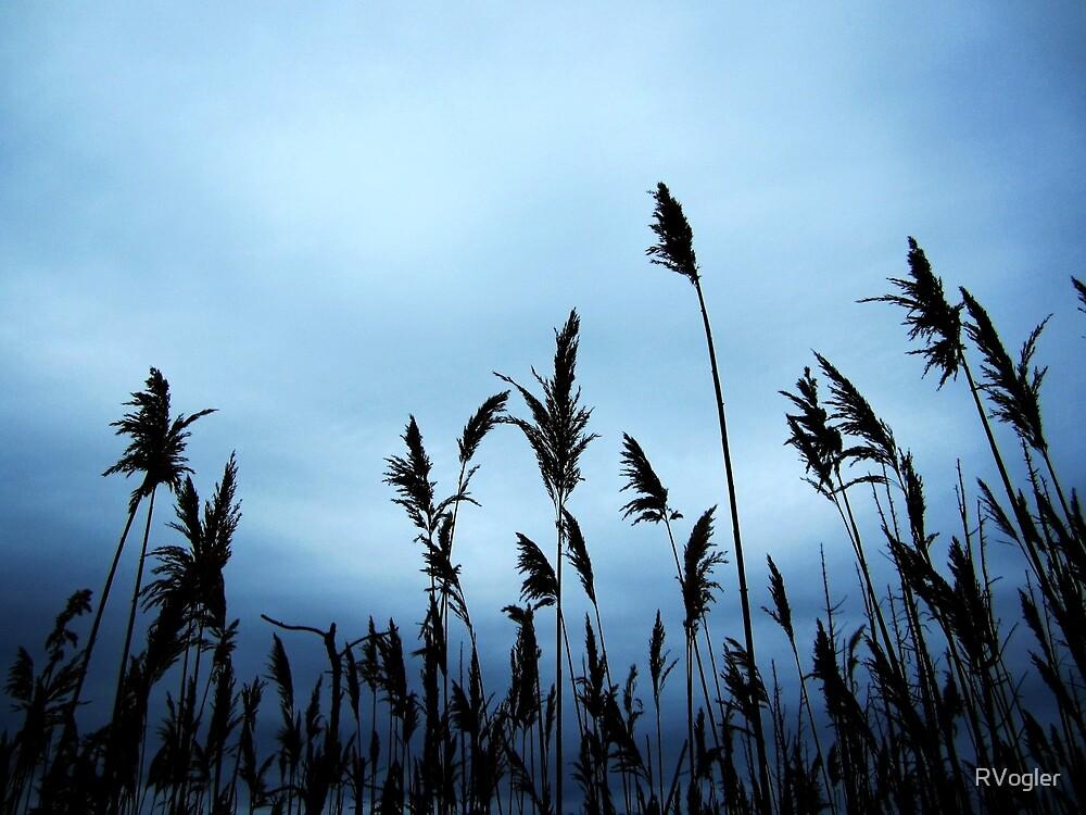Black Feathers by RVogler