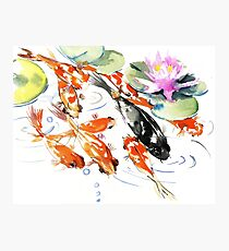 Nine KOI Photographic Print