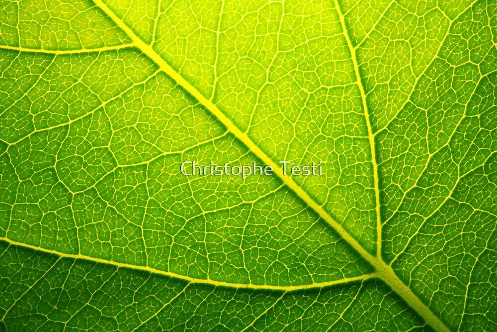 Green by Christophe Testi