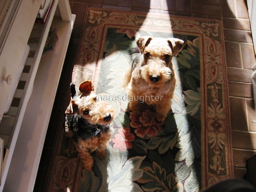 welsh terrier group by marasdaughter