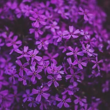 Purple Flowers by Redphones