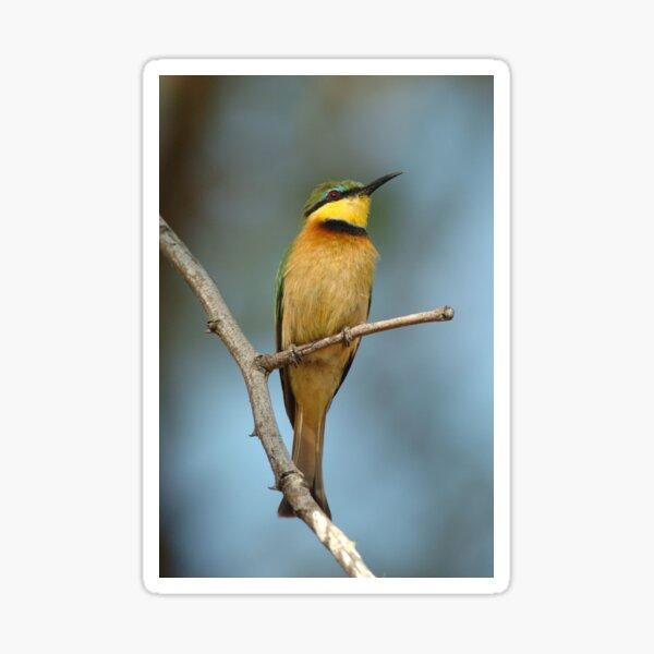 Little Bee-eater Sticker