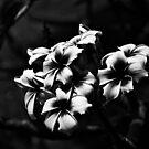 Flowers by dcdigital