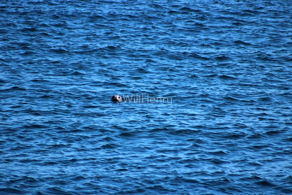 A Lone Seal by WillHenry