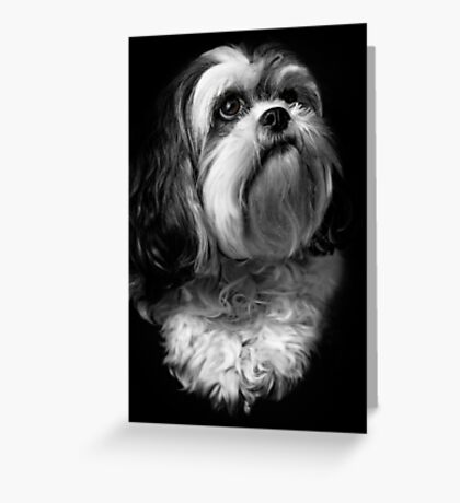 Portrait of Tam Greeting Card