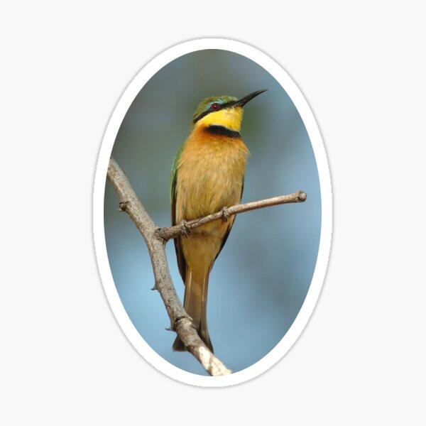 Little Bee-eater portrait Sticker