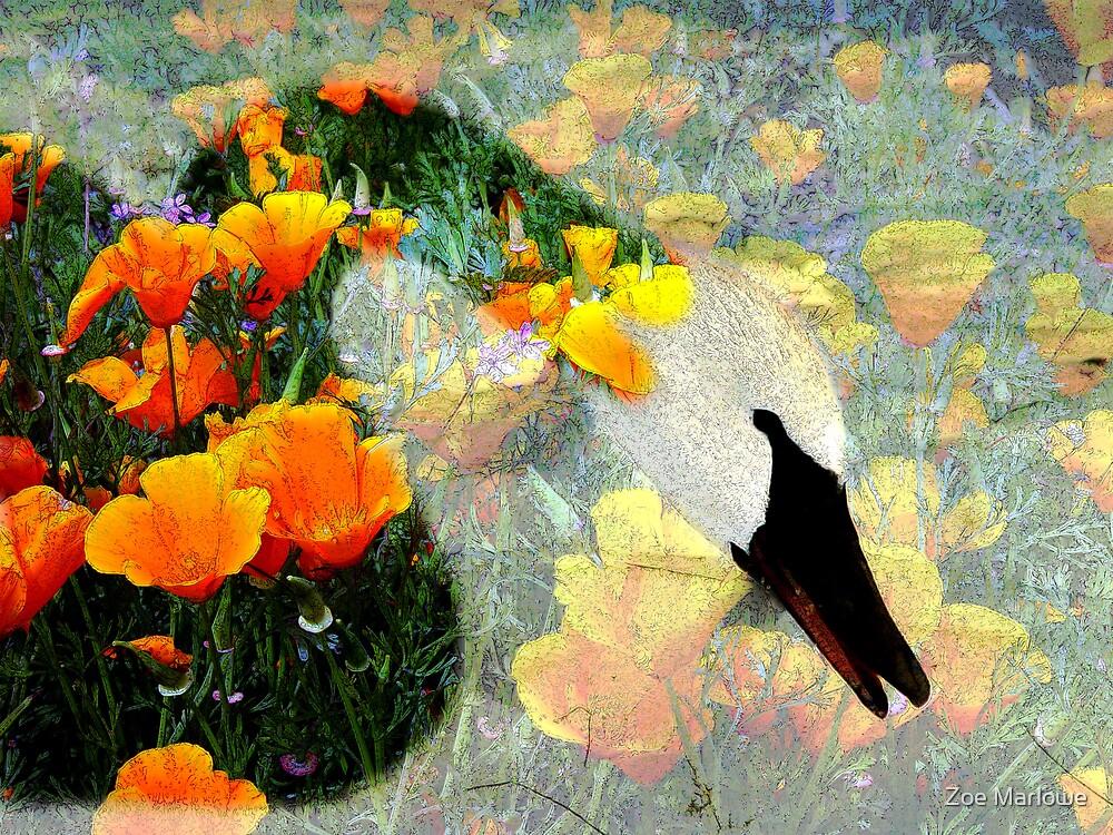Strange Bird by Zoe Marlowe