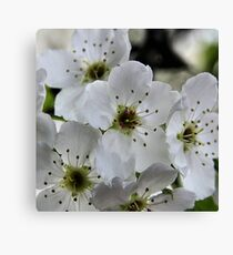 Spring in Suburbia Canvas Print