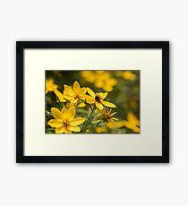 Little Yellow Flowies Framed Print