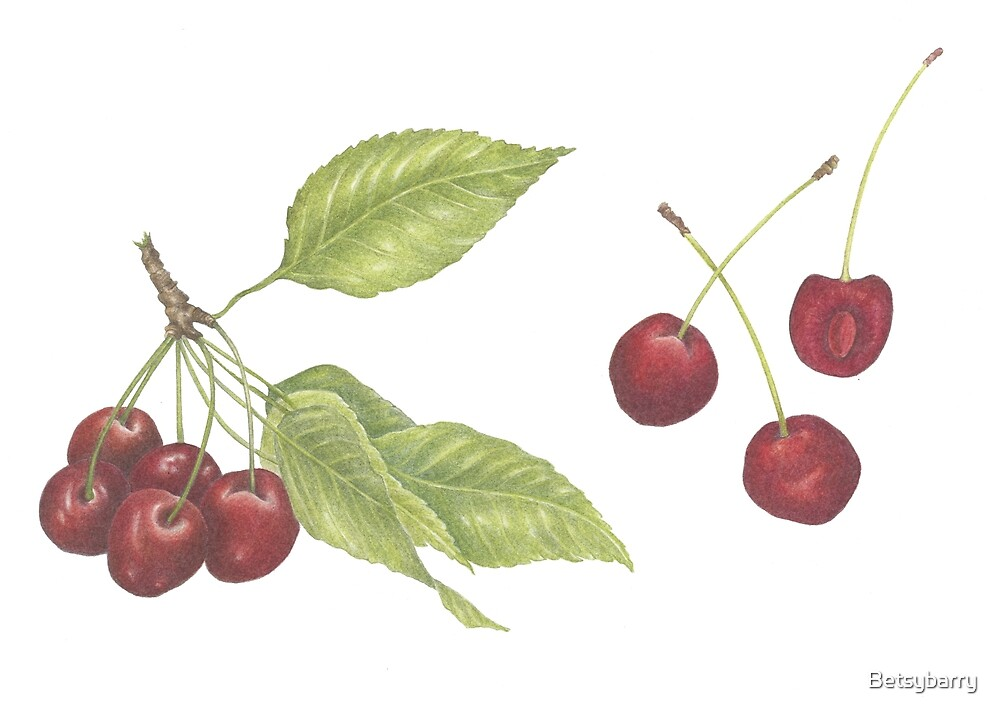 Cherries by Betsybarry